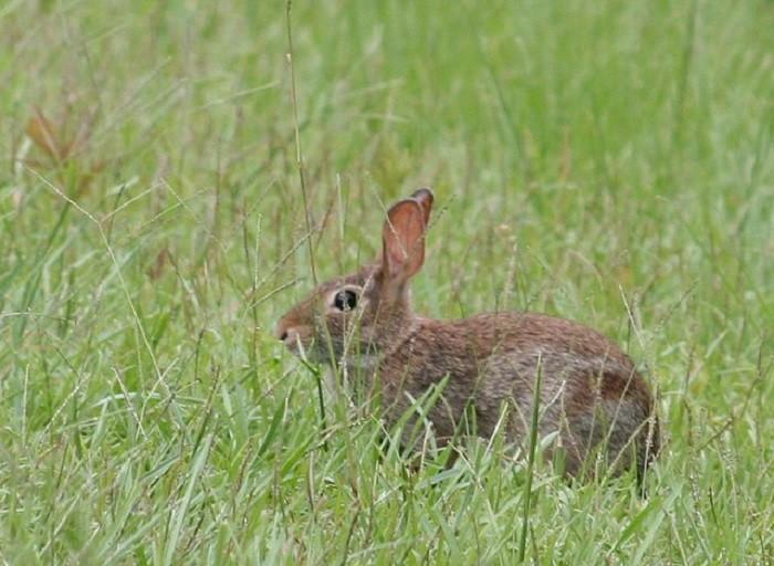 13. So many wild rabbits are everywhere.