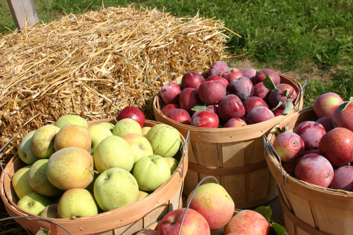 7) Fall was made for picking apples and hay rides at the orchard.