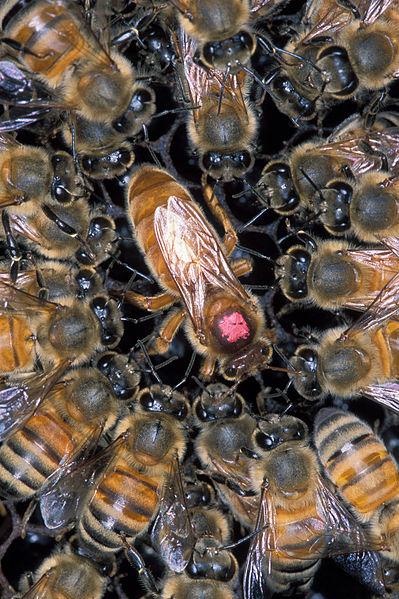 7. Killer Bees
