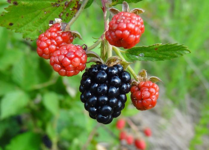 3. Go berry picking