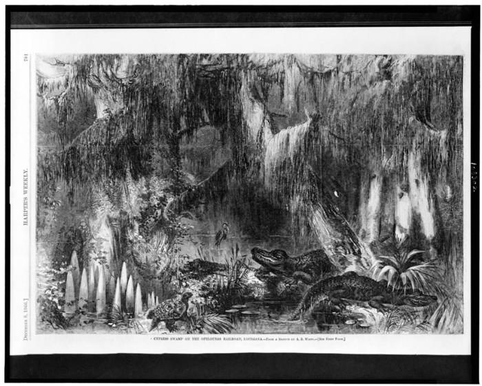 1) Cypress Swamp Wood Engraving, 1866