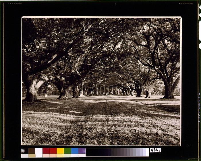 10) Road to a Plantation, 1938