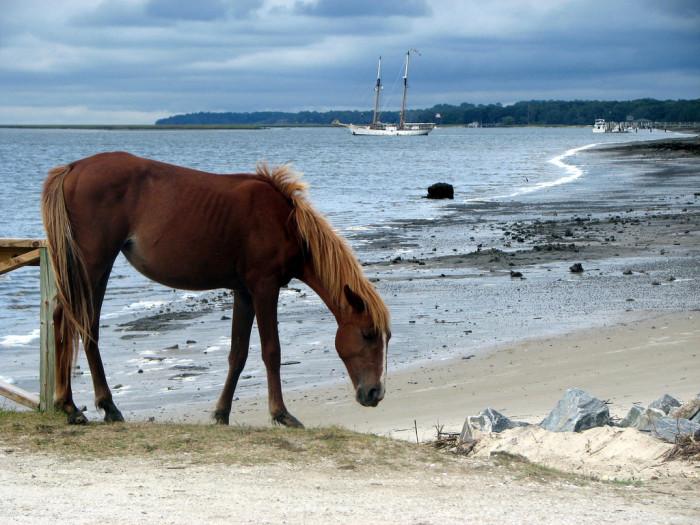 4) Cumberland Island