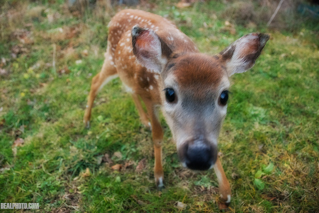 """14. """"Then I Met Bambi the Fawn"""" by Andy Beal"""