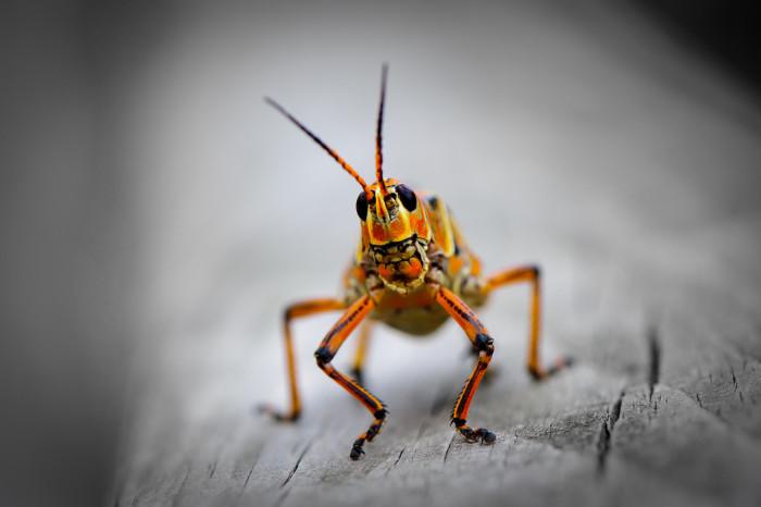 7. Giant Bugs