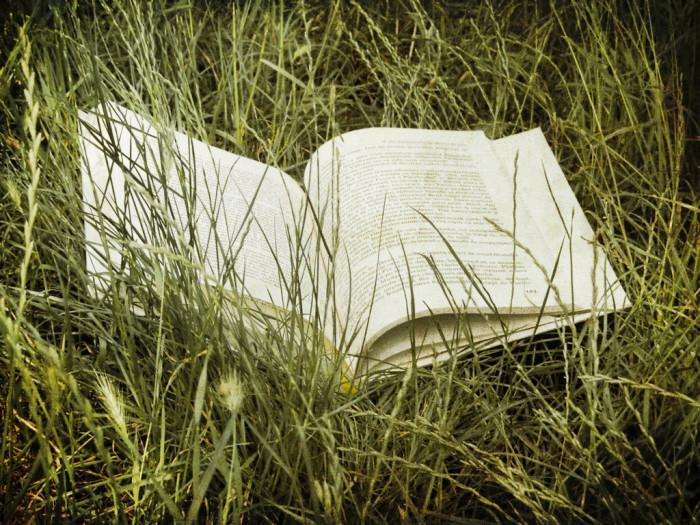 17. A Basic Knowledge Of South Carolina Plants