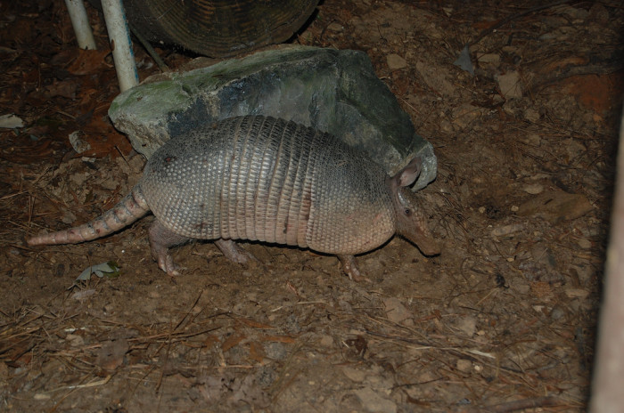 7. Maybe even a few armadillos.