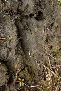 4. Local Big Foot Sightings