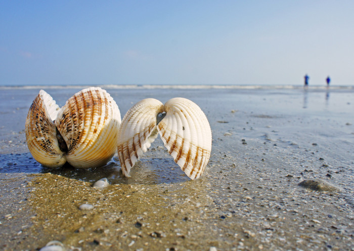 7. Kiawah Island is a gorgeous location and the beaches are not so crowded as in other spots.
