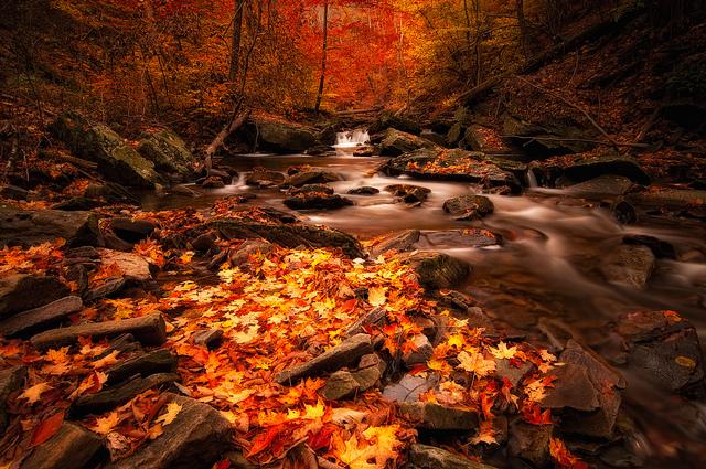8. Appreciate the gorgeous fall foliage.