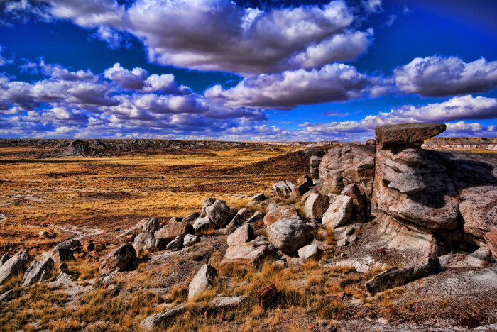 3. Petrified Forest National Park