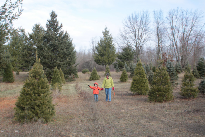 3) You remember searching the Christmas tree farm for the perfect tree.