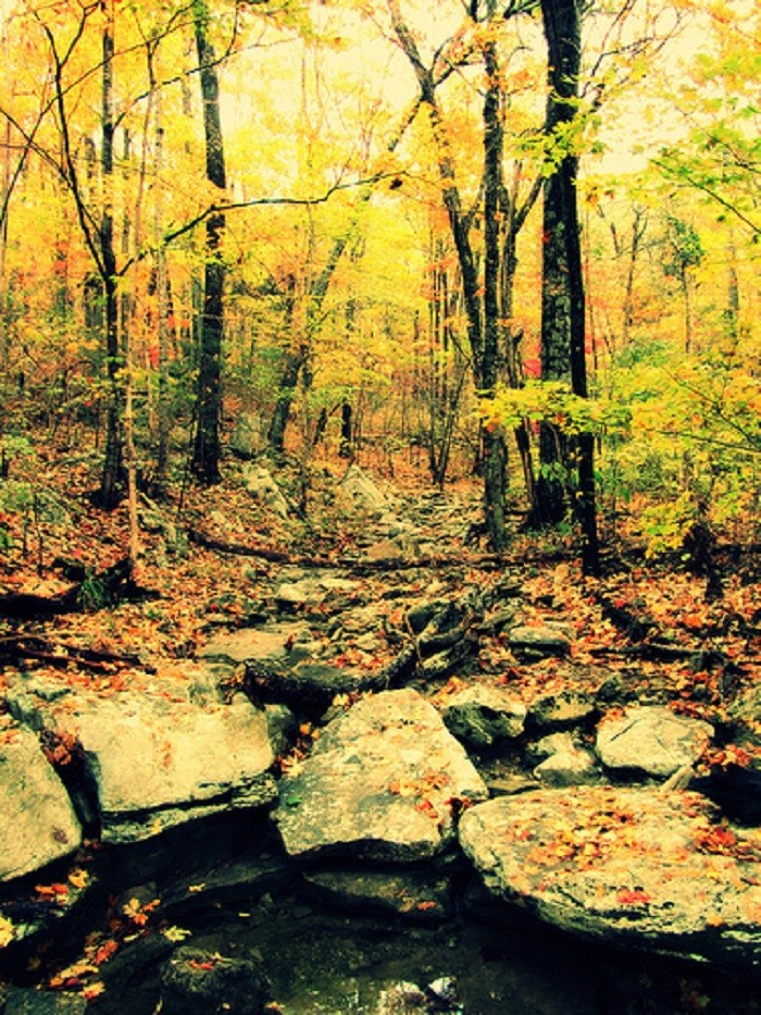 12. A beautiful forest in Huntsville, Alabama.
