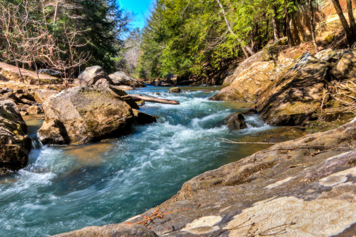 5. William B. Bankhead National Forest