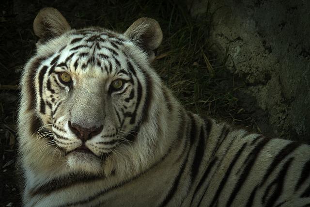 11. The Audubon Zoo (New Orleans)