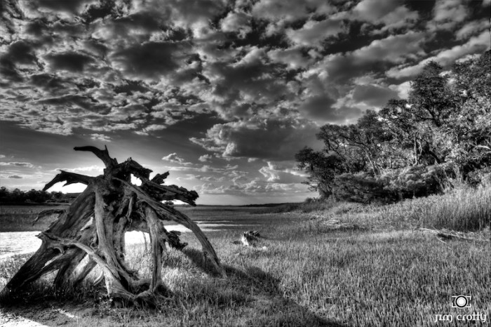 "7. ""May Afternoon on the Marsh in Black and White"""