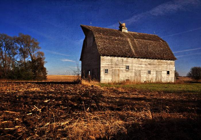 5. This old barn sits unused, looking out over a field after harvest