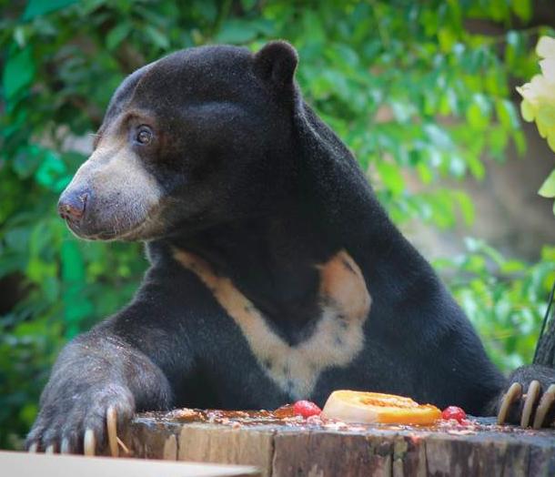 5) Mesker Park Zoo in Evansville (2421 Bement Avenue, Evansville, IN)