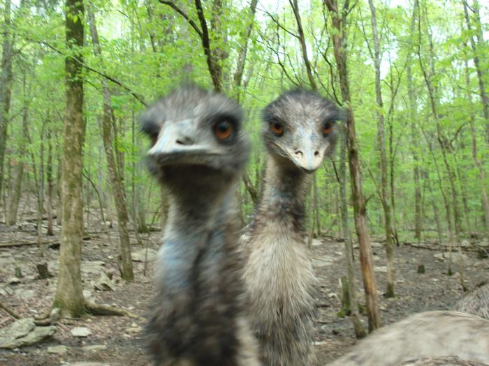 2. Harmony Park Safari - Huntsville, AL