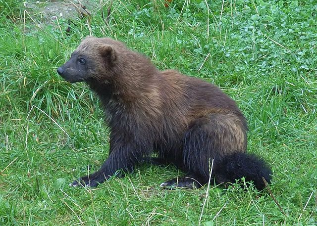 9) So most of us know Michigan by several nicknames, including the Wolverine State.