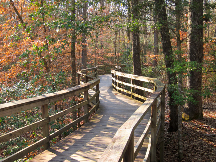 13. Congaree National Forest, Hopkins, SC