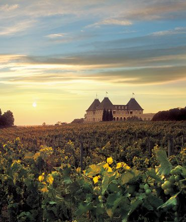 4) Taking a tour through the wineries at Chateau Elan.