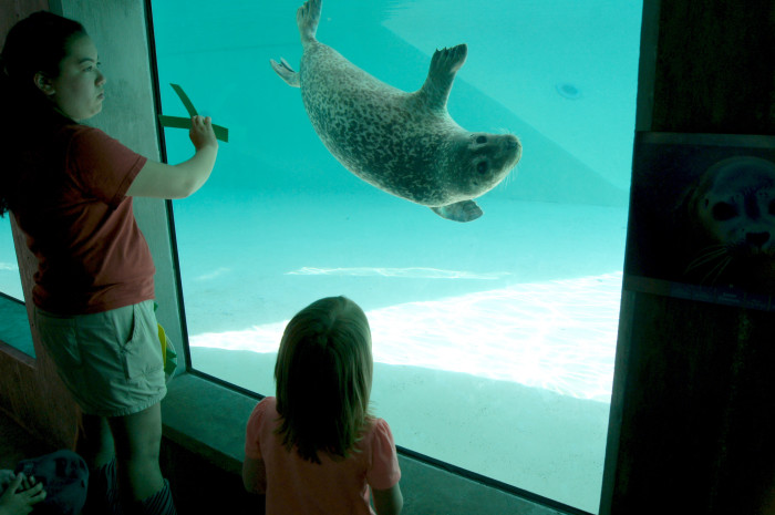 5. Visit the animals at the Blank Park Zoo.
