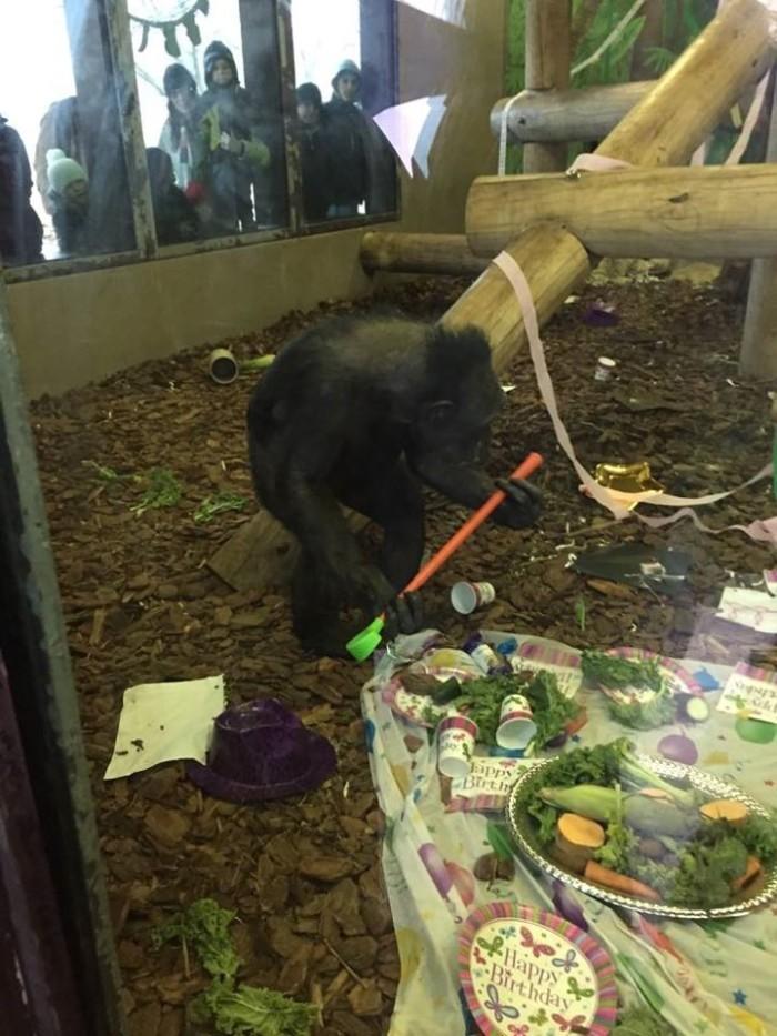 6) Potawatomi Zoo (500 S. Greenlawn, South Bend, IN)