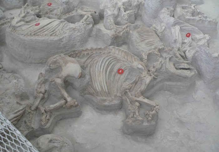 7) Ashfall Fossil Beds State Historical Park
