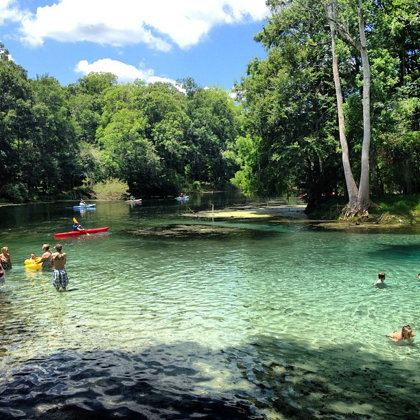 7227873224 8ca2c250c2 o In: Rum Island Spring Ranked # 5! | Our Santa Fe River, Inc. (OSFR) | Protecting the Santa Fe River in North Florida