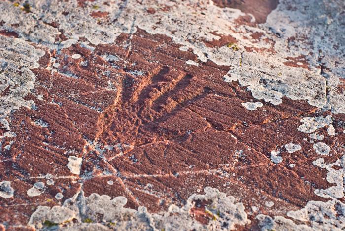 11. Jeffers Petroglyphs.