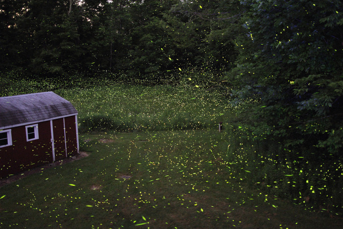 7) Catch fireflies on a hot summer night