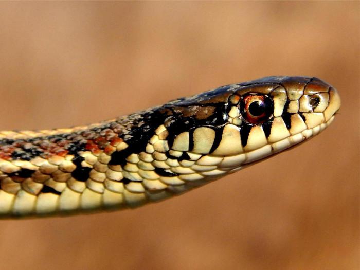 6. This happy-looking Garter Snake