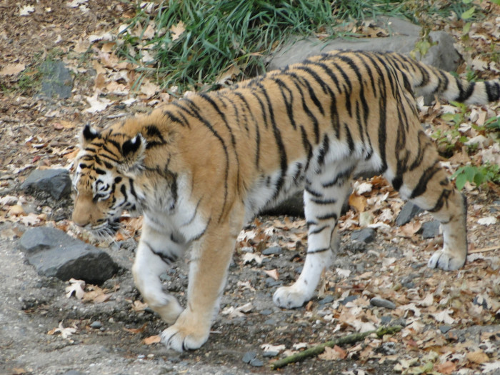 3. Visit the Como Zoo in St. Paul.