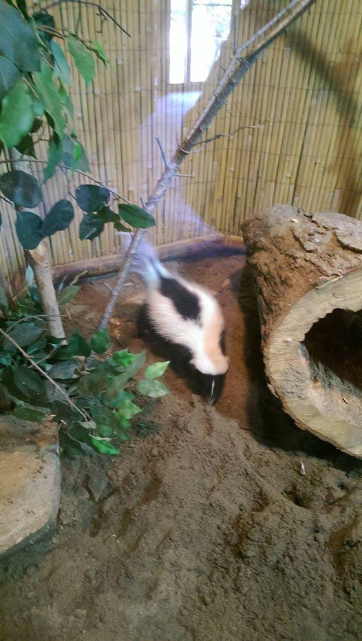 8-Zoo2