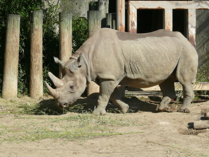 5) Columbus Zoo and Aquarium and Zoombezi Bay