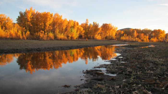9. Beautiful Foliage in Lyon County, Nevada