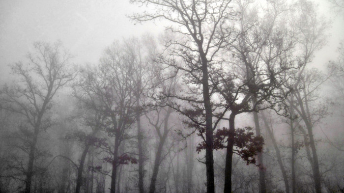 7) Ohio Turnpike trees in the early morning