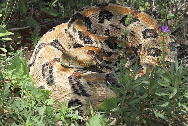 8. 'Rattle Snake' by John Flannery