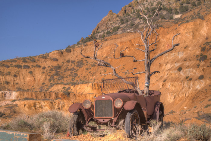 4. Tree Reclaiming Nature in Virginia City, Nevada