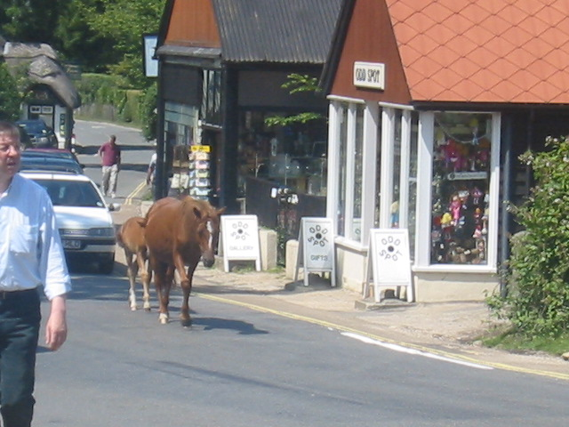 9. Horses have the right of way, it is very illegal to pass a horse