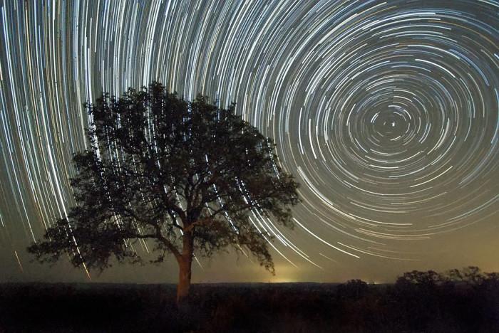 20) A Live Oak tree bears witness to the Perseid meteor shower in Texas.