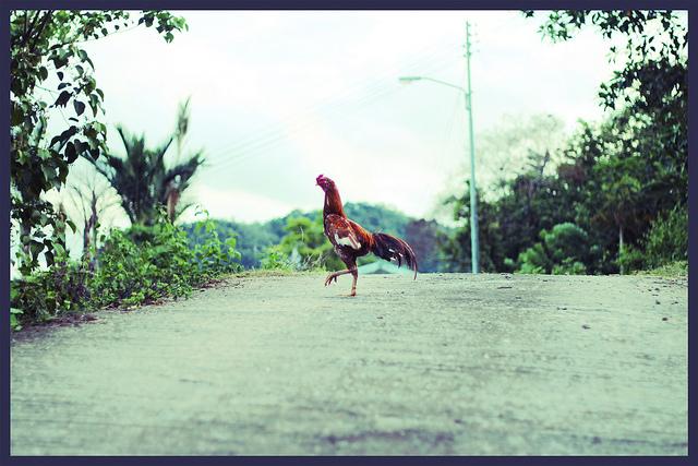 6. Dance the Chicken Dance.