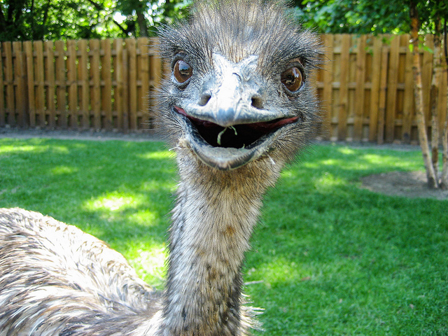 6. And goats. And ponies. And sometimes, confusingly, emus.