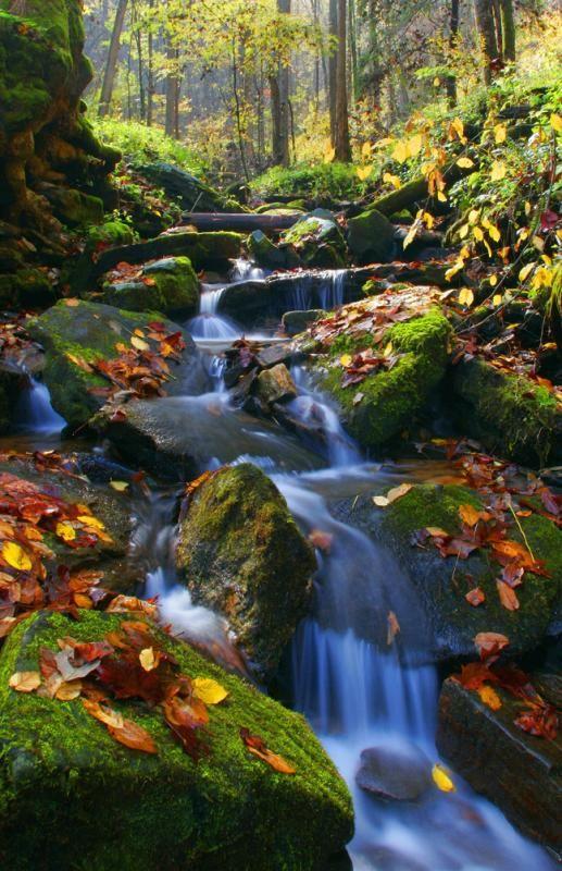 12) Chattahoochee National Forest Stream