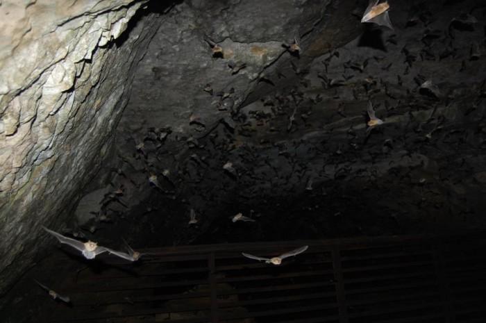 11. Sauta Cave - Scottsboro, AL