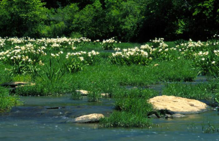 10. Cahaba River National Wildlife Refuge