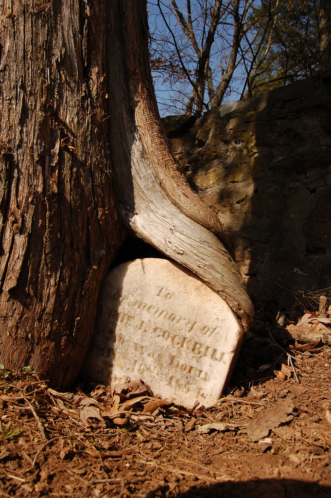 Aldie tree stone