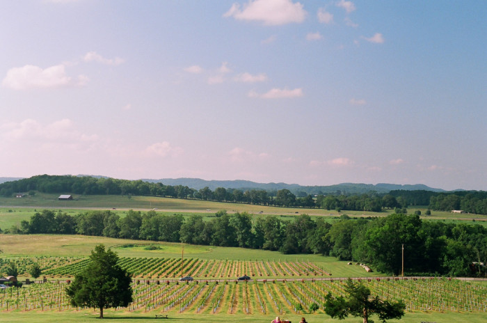 12) Arrington Vineyards - Arrington