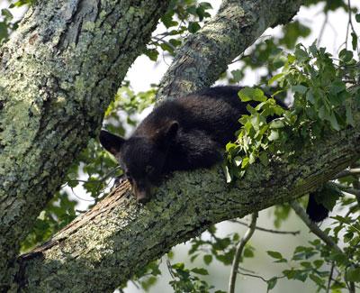4. Black Bear
